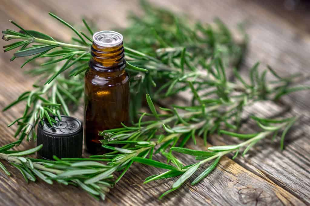 The Top 6 Proven Benefits and Uses of Rosemary Essential Oil