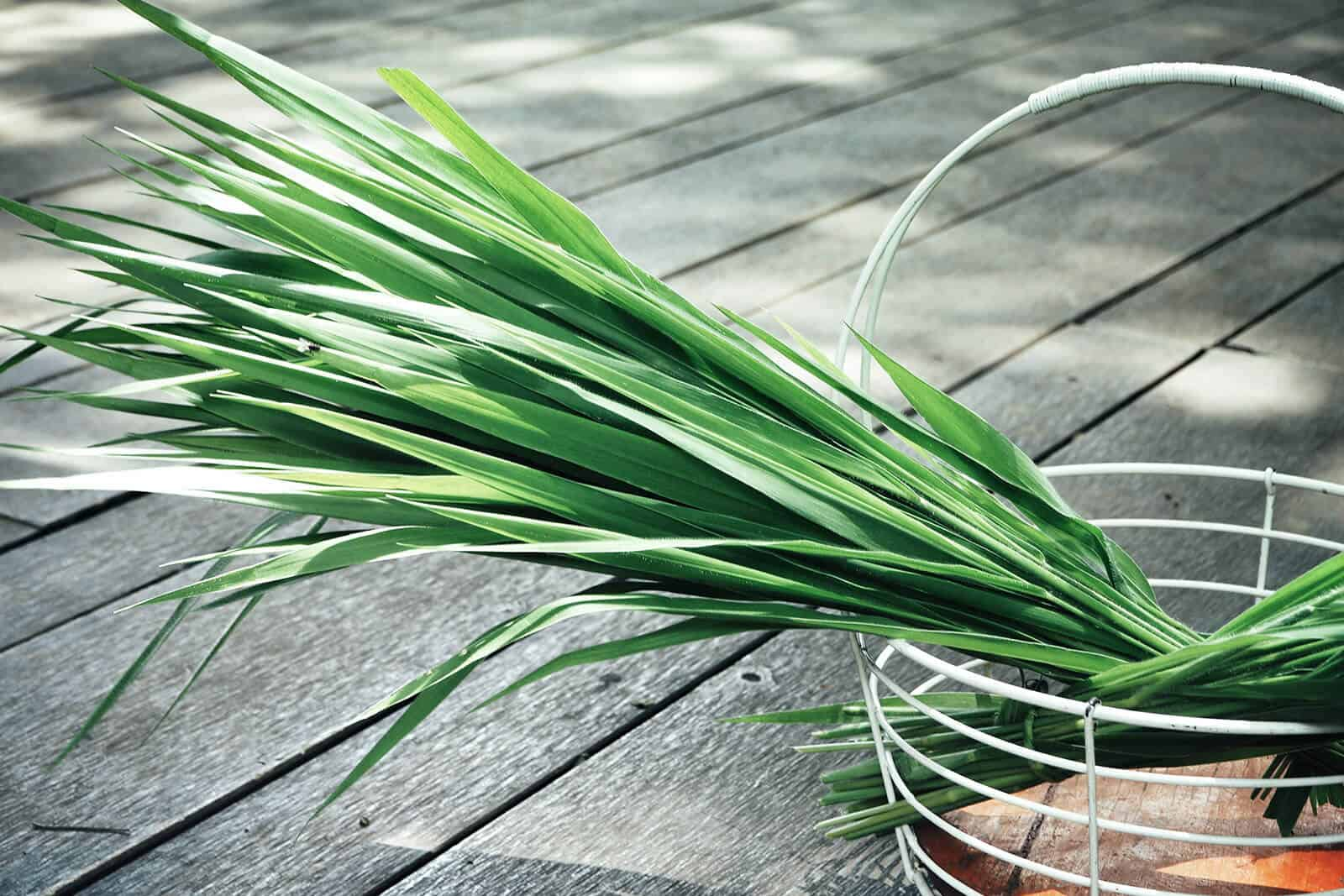 wellnessaromas-aromatherapy-essential-oil_vetiver-benefits-uses