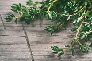 wellnessaromas-aromatherapy-essential-oil_thyme-benefits-uses