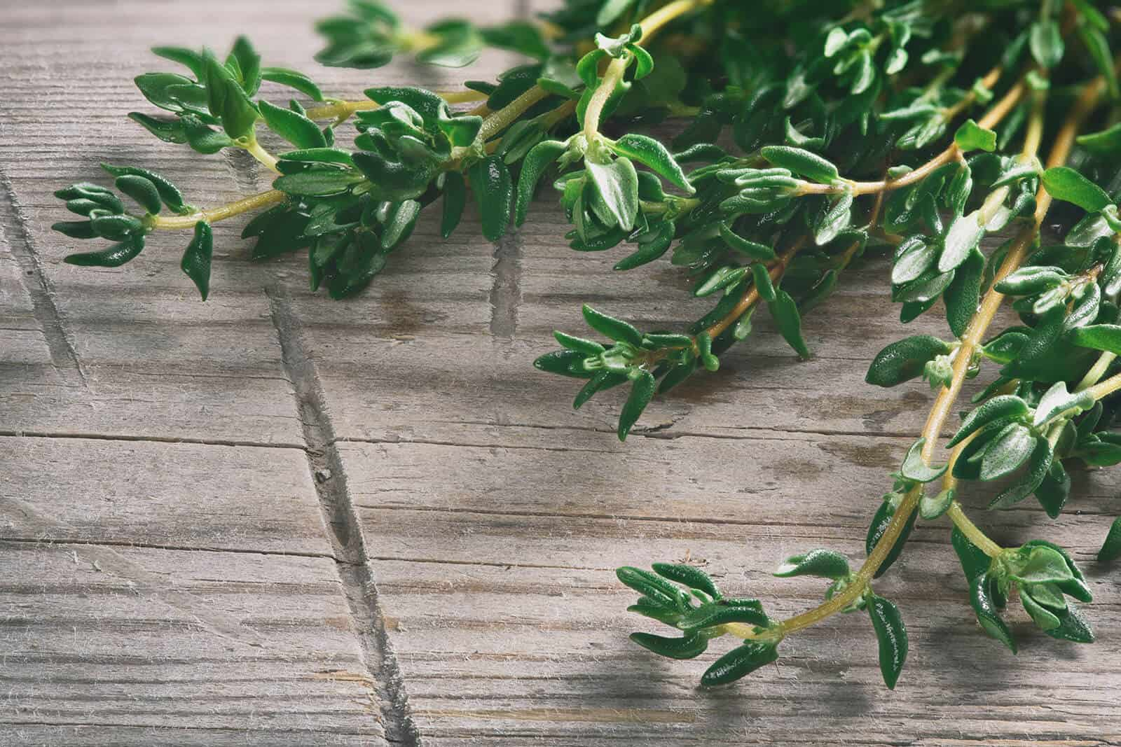Thyme Essential Oil Benefits And Uses Wellness Aromas