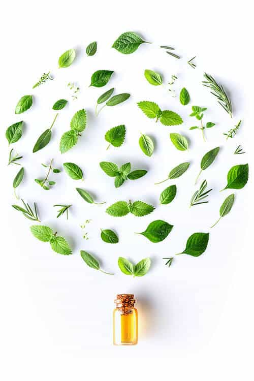 Bottle of essential oil with round shape of fresh herbs and healing plants
