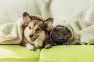 A dog and cats relaxing together on sofa